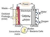 Anode Respiring Bacteria